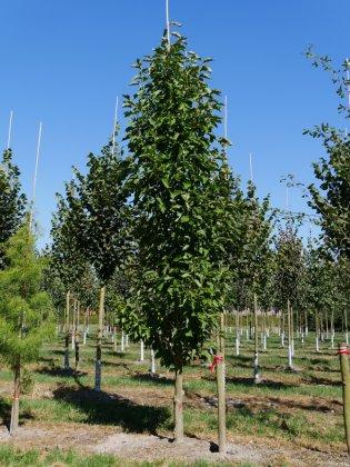 Magnolia Heaven Scent 1-1