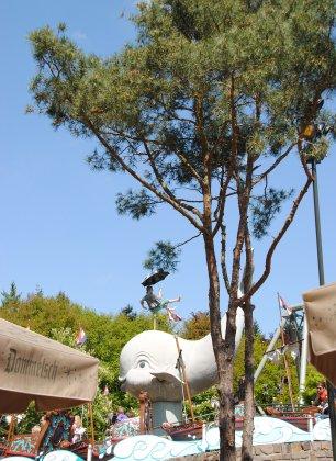Meerstammige Bomen 5