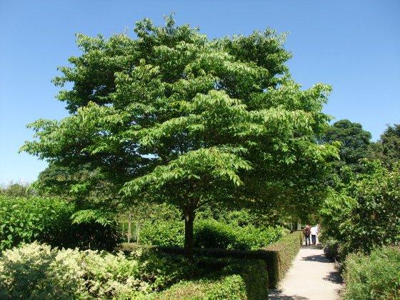 Alnwick-castle- -gardens- 13
