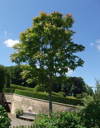 Alnwick-castle- -gardens- 15