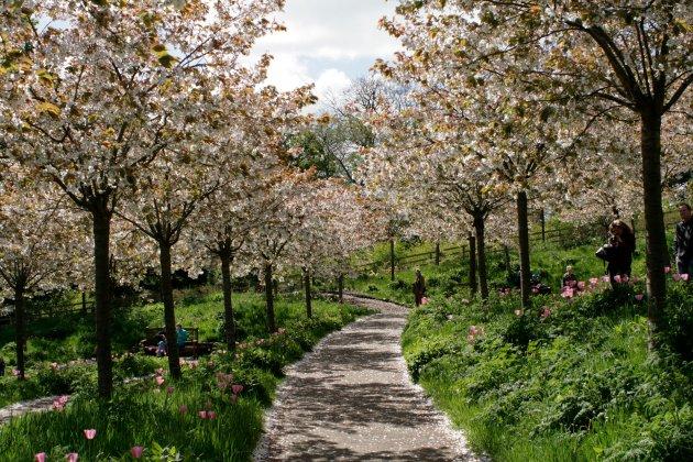 Alnwick-castle- -gardens- 8
