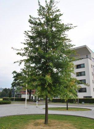 Grolsch-veste- 2