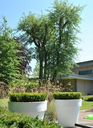 Privetuin-met-grote-bomen- 2