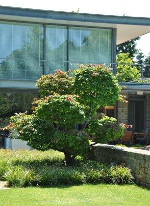 Privetuin-met-grote-bomen- 4