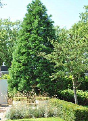 Privetuin-met-grote-bomen- 5