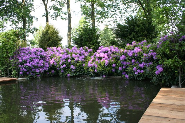 Privetuin-met-rhododendrons-1- 5