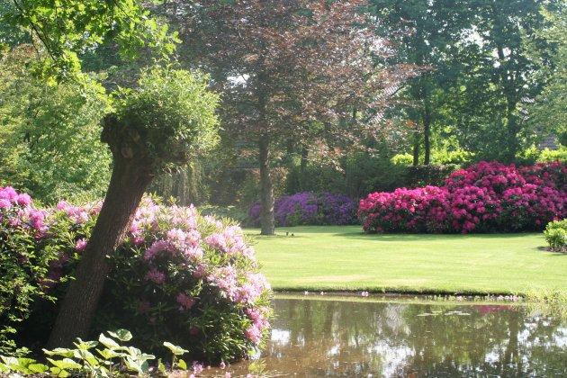 Privetuin-met-rhododendrons-1- 6
