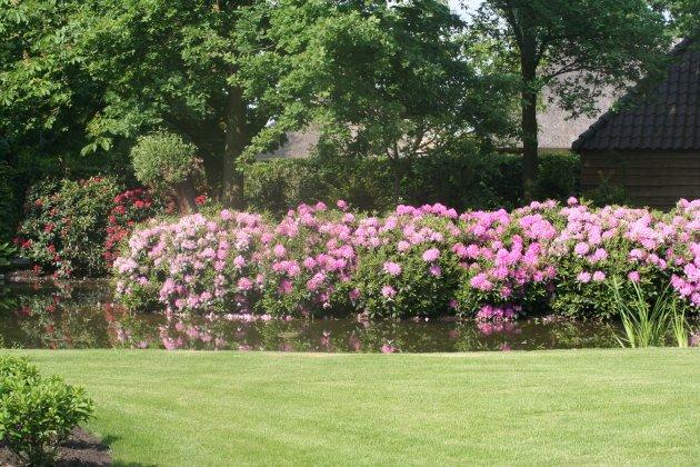 Privetuin-met-rhododendrons-1- 8