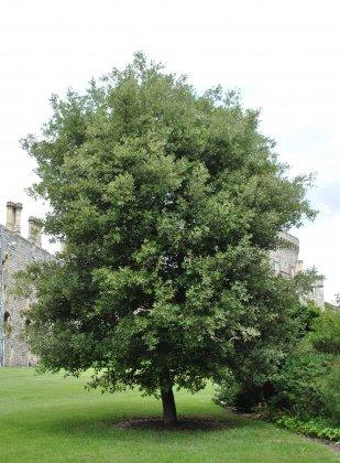 Windsor-castle- 2