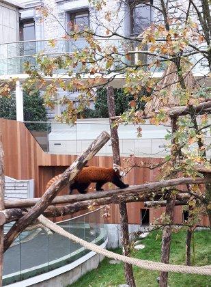 Zoo-antwerpen-- 2