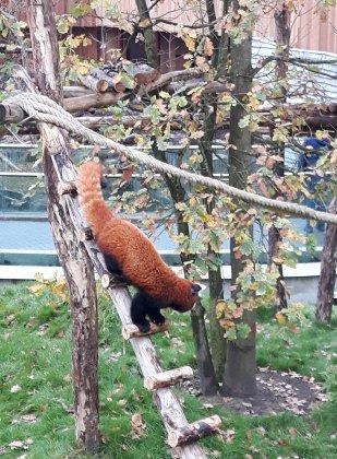 Zoo-antwerpen-- 5