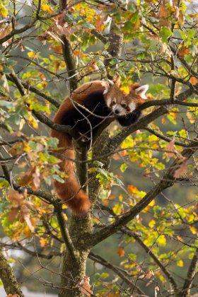 Zoo Antwerpen - Quercus Robur Custom