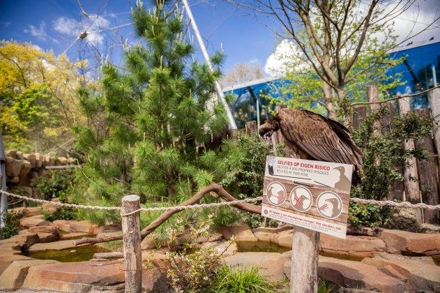 Zoo Antwerpen Pinus Custom