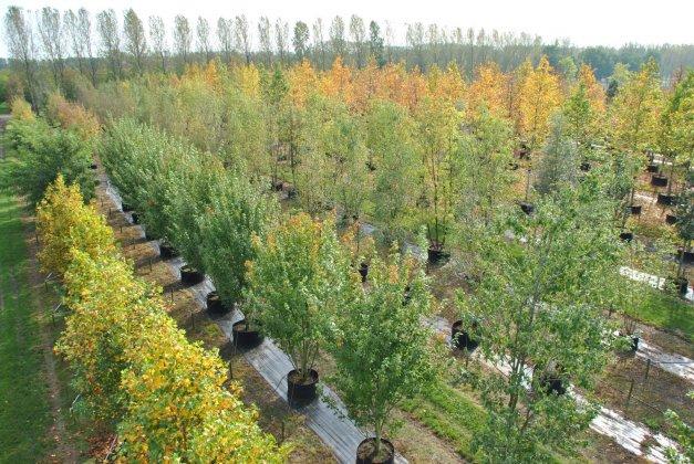 Bomen In Airpot-springring 1-1