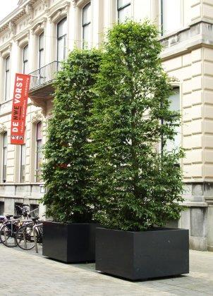 Zwarte boombakken langs de straat